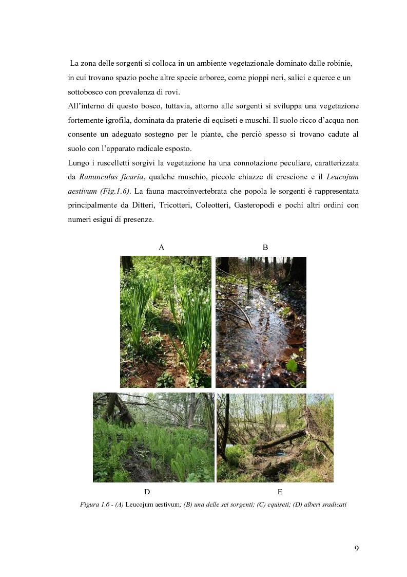 Anteprima della tesi: Dinamica di accrescimento di Leucojum aestivum L. in alcune sorgenti di terrazzo a Pavia, Pagina 9