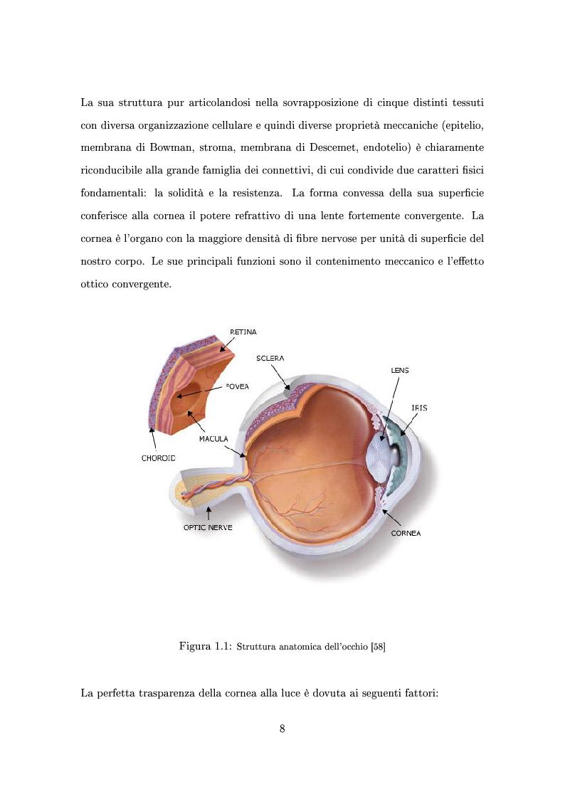 Anteprima della tesi: Un modello numerico per il comportamento meccanico della cornea affetta da cheratocono, Pagina 4