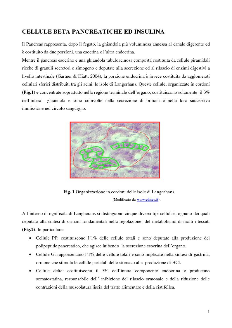 Anteprima della tesi: Studio della vitalità e della sopravvivenza cellulare in cellule beta pancreatiche immunoisolate in membrane di alginato, Pagina 2