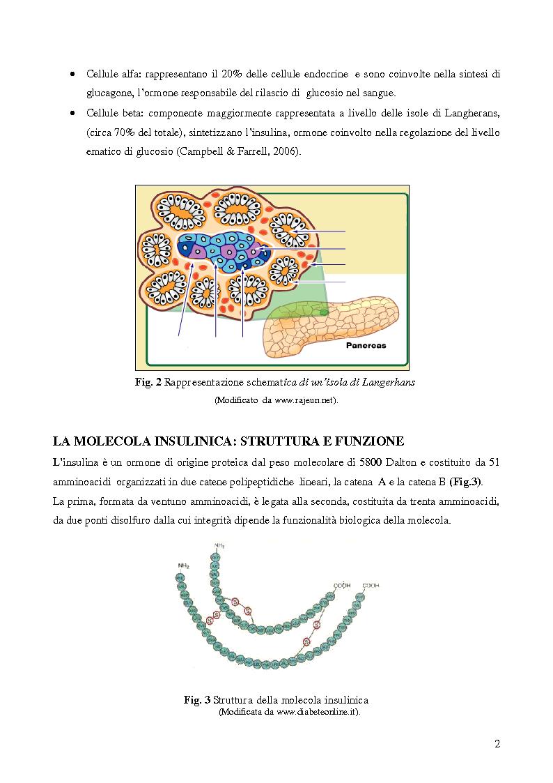 Anteprima della tesi: Studio della vitalità e della sopravvivenza cellulare in cellule beta pancreatiche immunoisolate in membrane di alginato, Pagina 3
