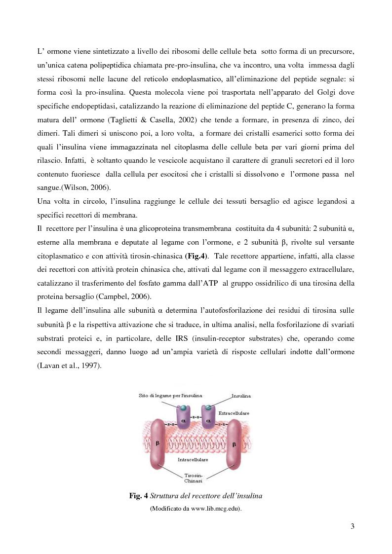 Anteprima della tesi: Studio della vitalità e della sopravvivenza cellulare in cellule beta pancreatiche immunoisolate in membrane di alginato, Pagina 4