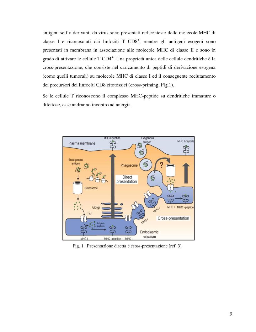 Anteprima della tesi: L'immunosoppressione tumorale nel carcinoma renale, Pagina 6