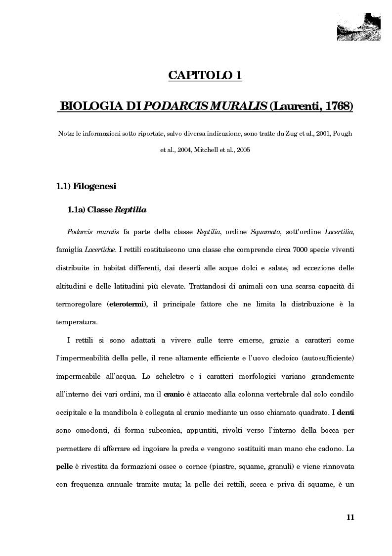Anteprima della tesi: Studio della segregazione spaziale in un sauro polimorfico, Pagina 2