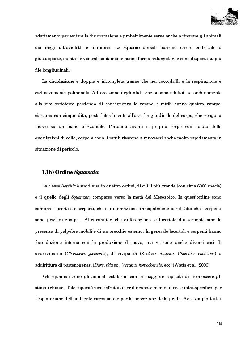 Anteprima della tesi: Studio della segregazione spaziale in un sauro polimorfico, Pagina 3