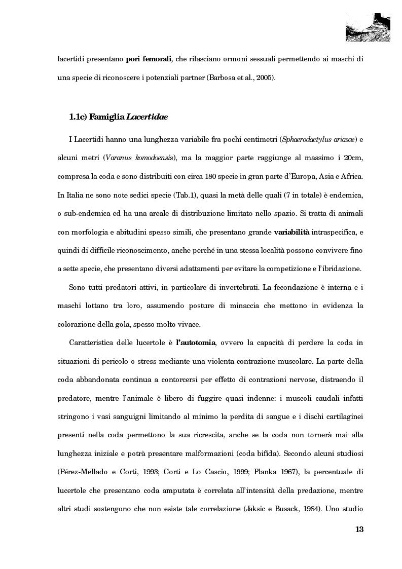 Anteprima della tesi: Studio della segregazione spaziale in un sauro polimorfico, Pagina 4