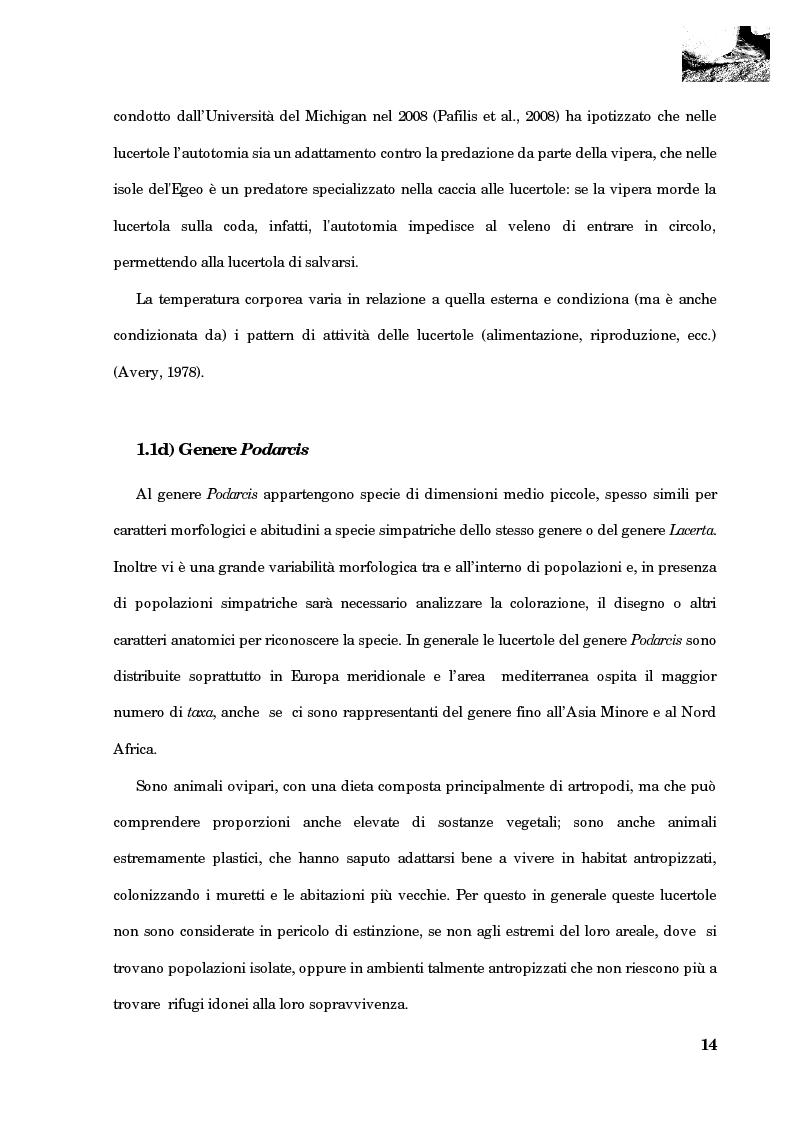Anteprima della tesi: Studio della segregazione spaziale in un sauro polimorfico, Pagina 5