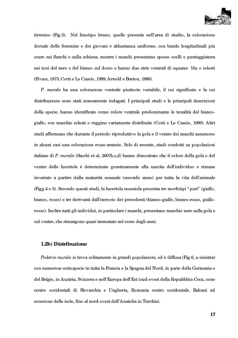 Anteprima della tesi: Studio della segregazione spaziale in un sauro polimorfico, Pagina 8