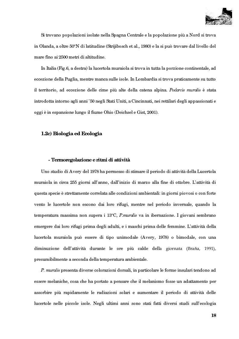 Anteprima della tesi: Studio della segregazione spaziale in un sauro polimorfico, Pagina 9
