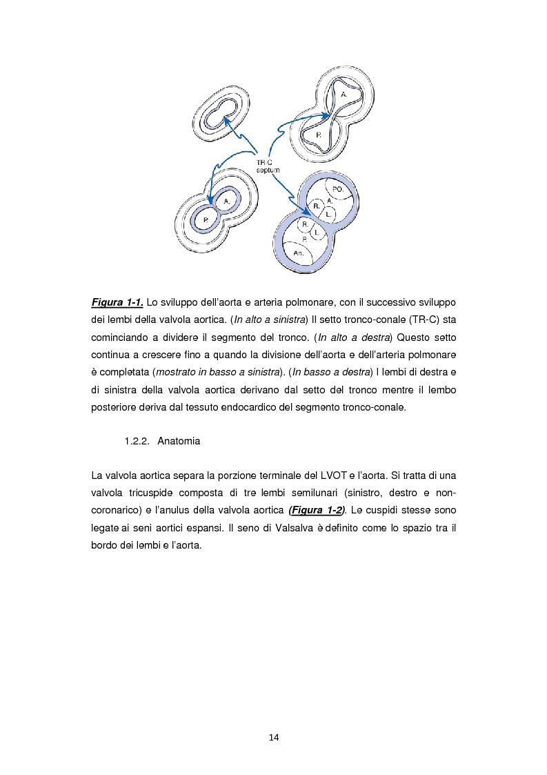 Anteprima della tesi: Nuove frontiere nella chirurgia sostitutiva della valvola aortica, Pagina 6