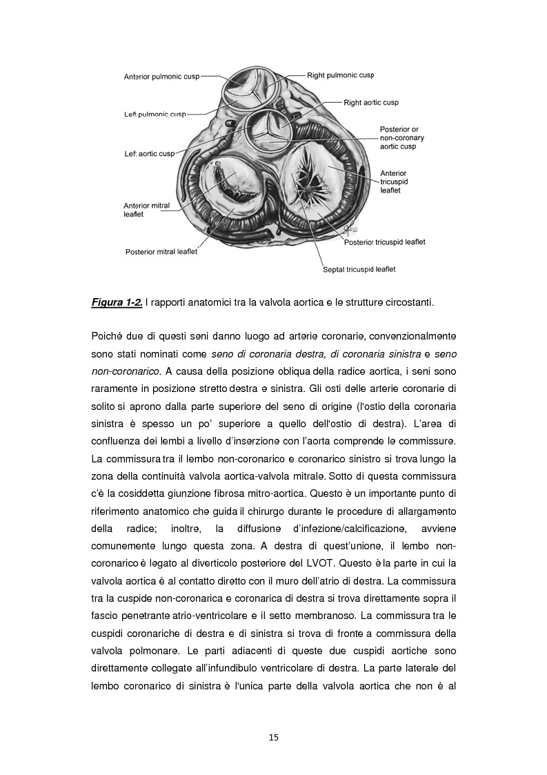 Anteprima della tesi: Nuove frontiere nella chirurgia sostitutiva della valvola aortica, Pagina 7