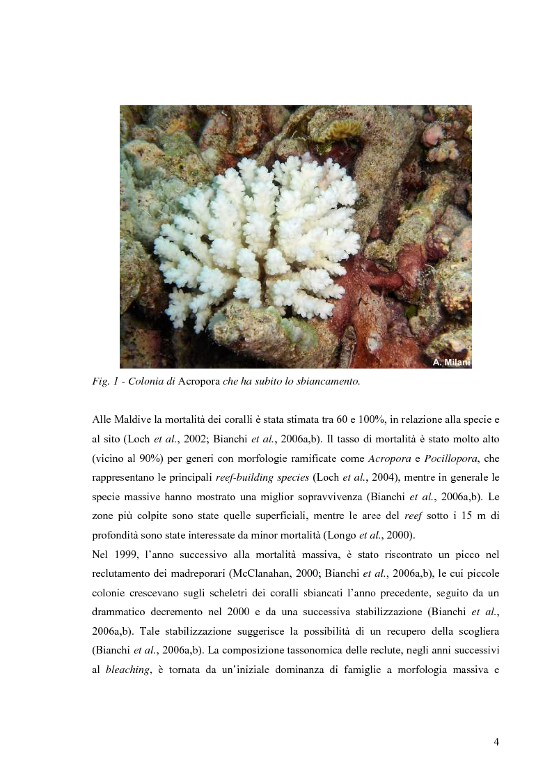 Anteprima della tesi: Recruitment and juvenile community structure of stony corals in the Maldives: spatio-temporal variations and importance of the size of the sample unit, Pagina 3