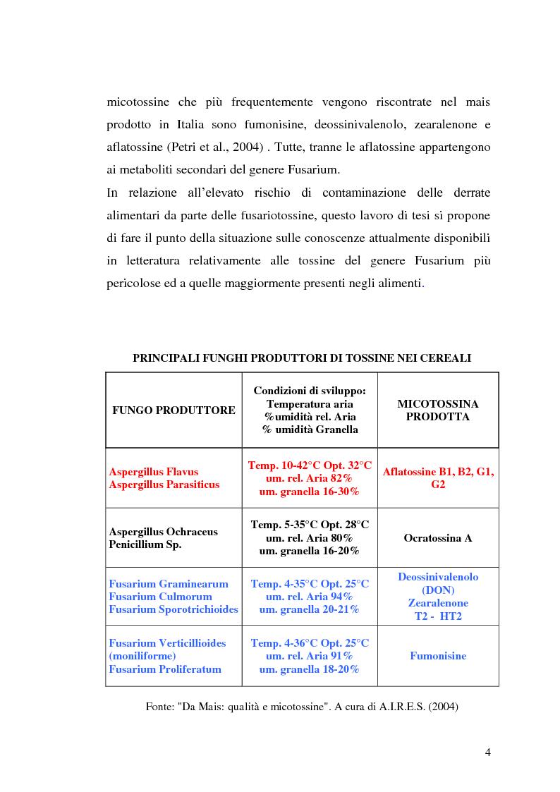 Anteprima della tesi: Fusariotossine: Tossicità alimentare ed ambientale, Pagina 5