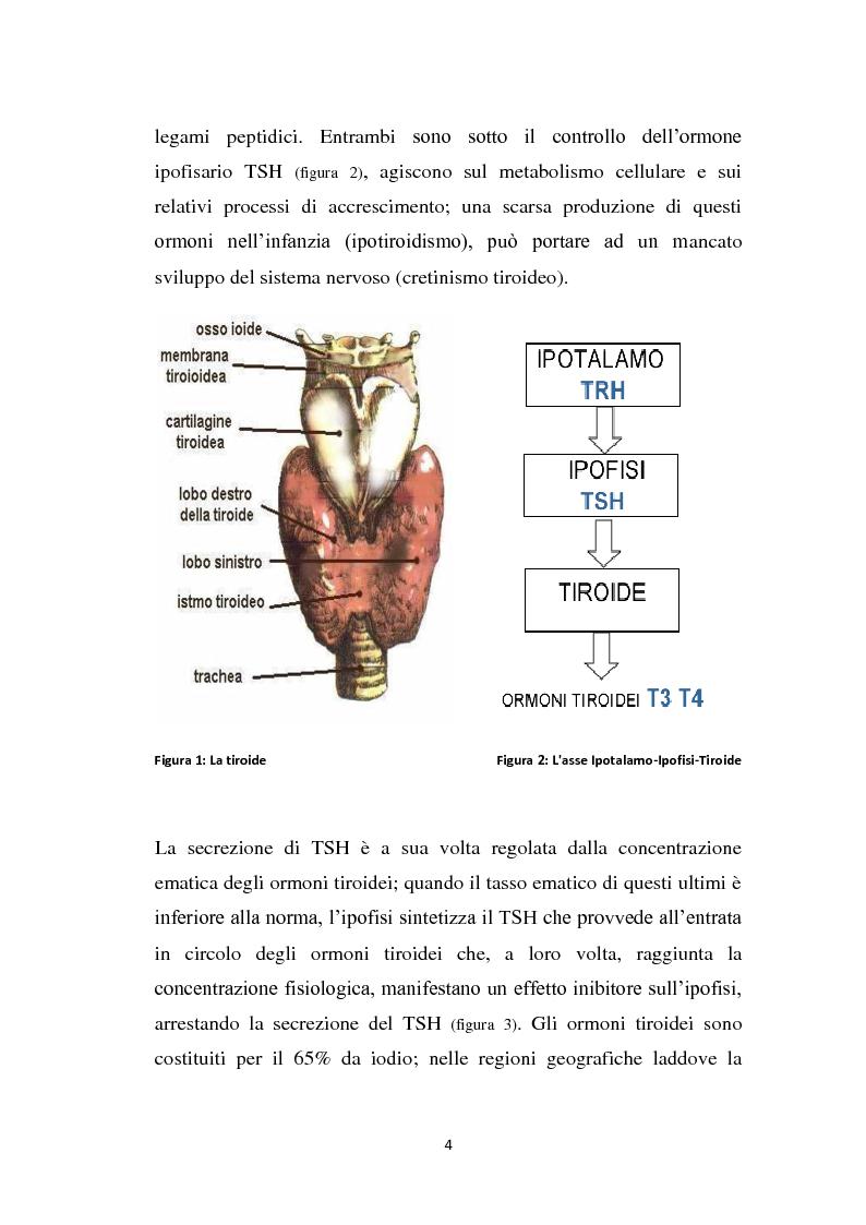Anteprima della tesi: Screening delle patologie tiroidee nel territorio Sannita-Irpino e monitoraggio del loro decorso, Pagina 3