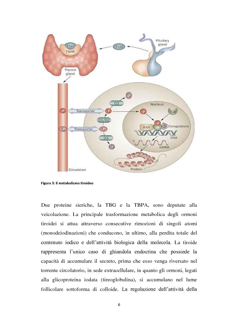 Anteprima della tesi: Screening delle patologie tiroidee nel territorio Sannita-Irpino e monitoraggio del loro decorso, Pagina 5