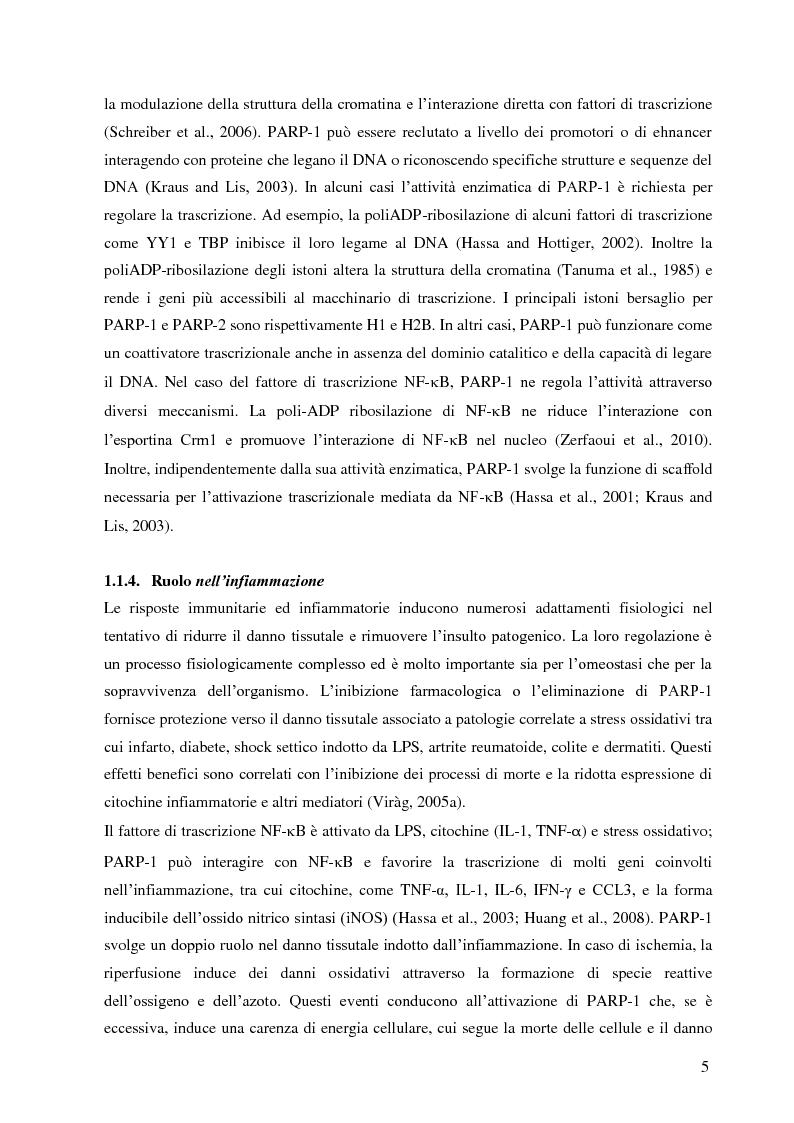 Anteprima della tesi: Meccanismi di immuno-regolazione: PARP-1 svolge ruoli opposti nel differenziamento delle cellule Th2 e T regolatorie, Pagina 6