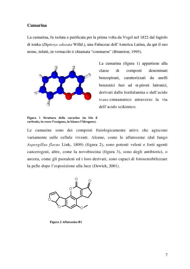 Anteprima della tesi: Attività antifungina di derivati cumarinici estratti da Magydaris pastinacea nei confronti di Candida albicans, Pagina 2