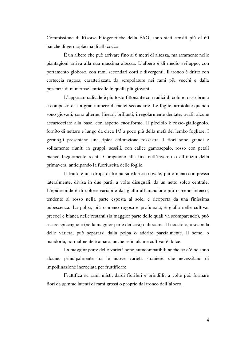 Anteprima della tesi: Comportamento vegeto-produttivo di diverse varietà di albicocco e nashi in Andalusia, Pagina 5