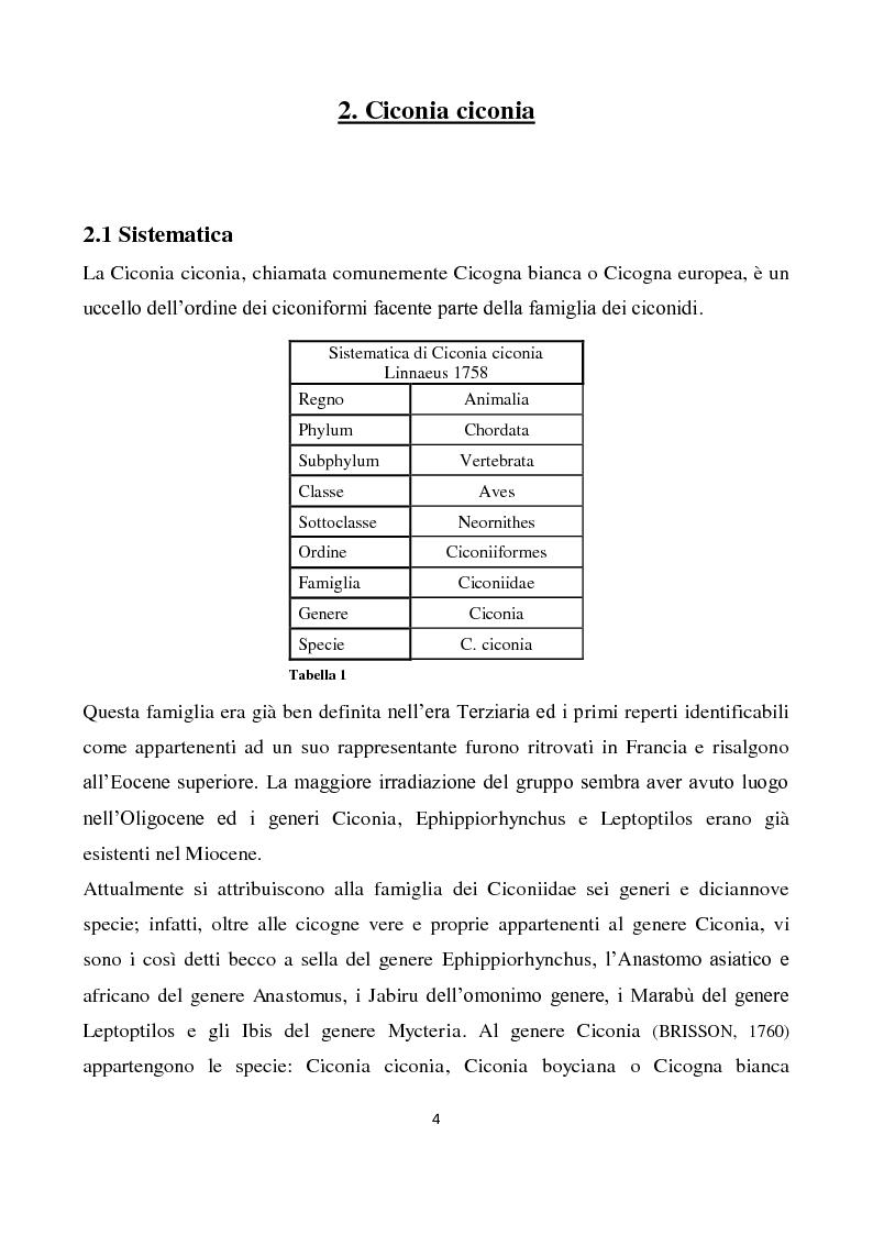 Anteprima della tesi: Migrazione della Cicogna bianca (Ciconia ciconia, Linnaeus 1758) e nidificazione in Italia, Pagina 3