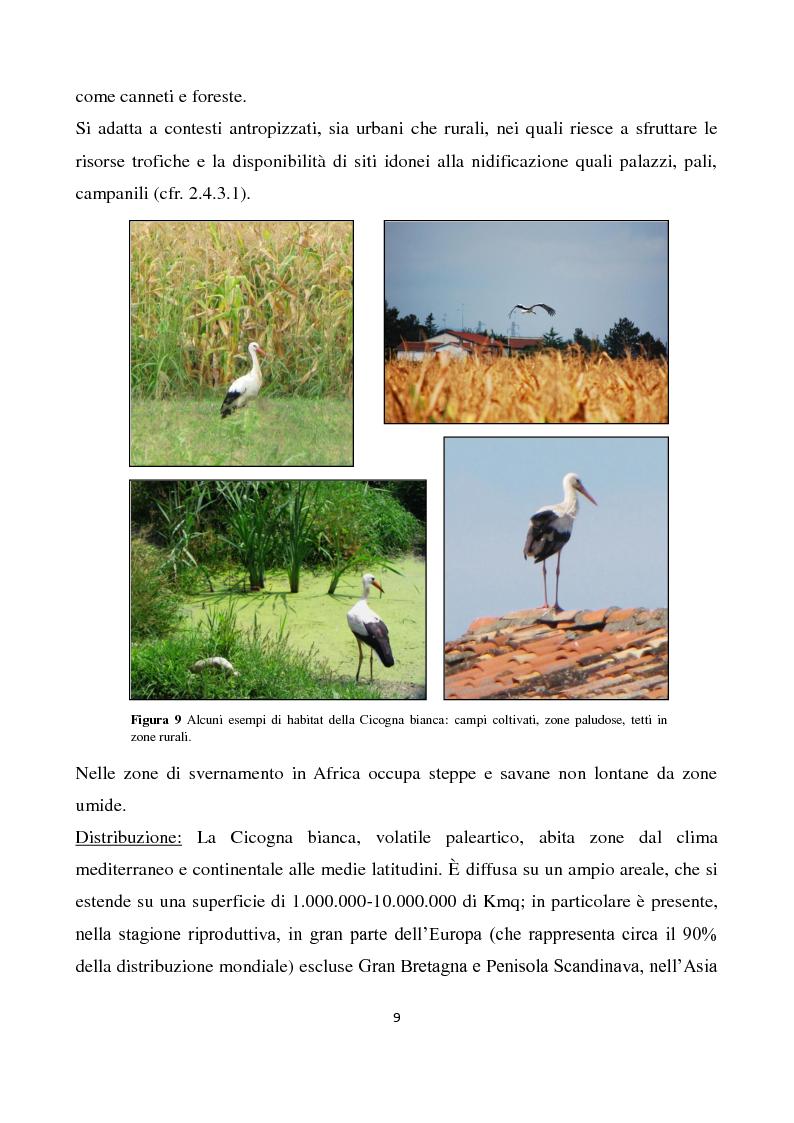 Anteprima della tesi: Migrazione della Cicogna bianca (Ciconia ciconia, Linnaeus 1758) e nidificazione in Italia, Pagina 8