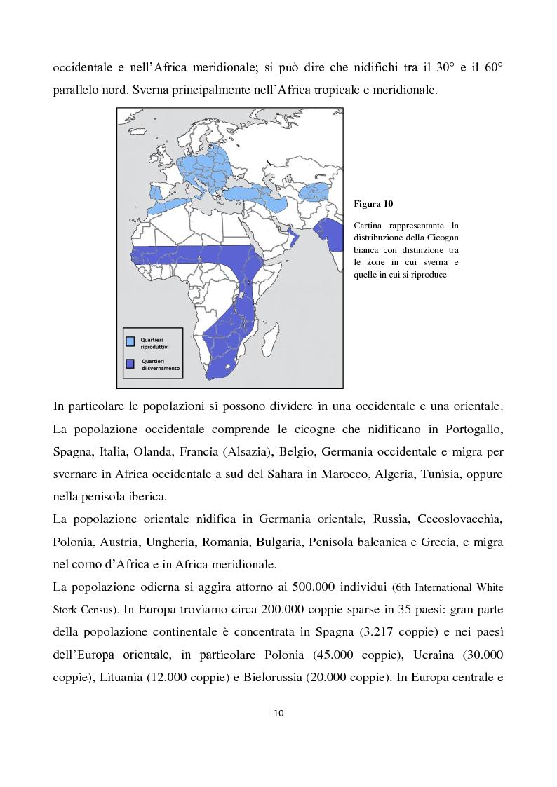 Anteprima della tesi: Migrazione della Cicogna bianca (Ciconia ciconia, Linnaeus 1758) e nidificazione in Italia, Pagina 9