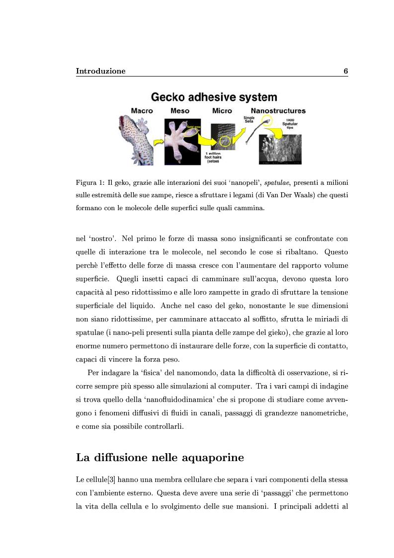 Anteprima della tesi: Analisi degli effetti di confinamento tramite dinamica molecolare, Pagina 4