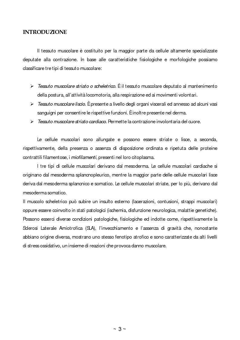 Anteprima della tesi: Ruolo dello stress ossidativo nell'atrofia muscolare, Pagina 2