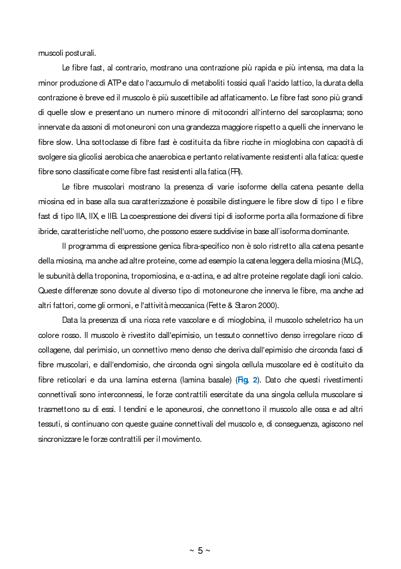 Anteprima della tesi: Ruolo dello stress ossidativo nell'atrofia muscolare, Pagina 4