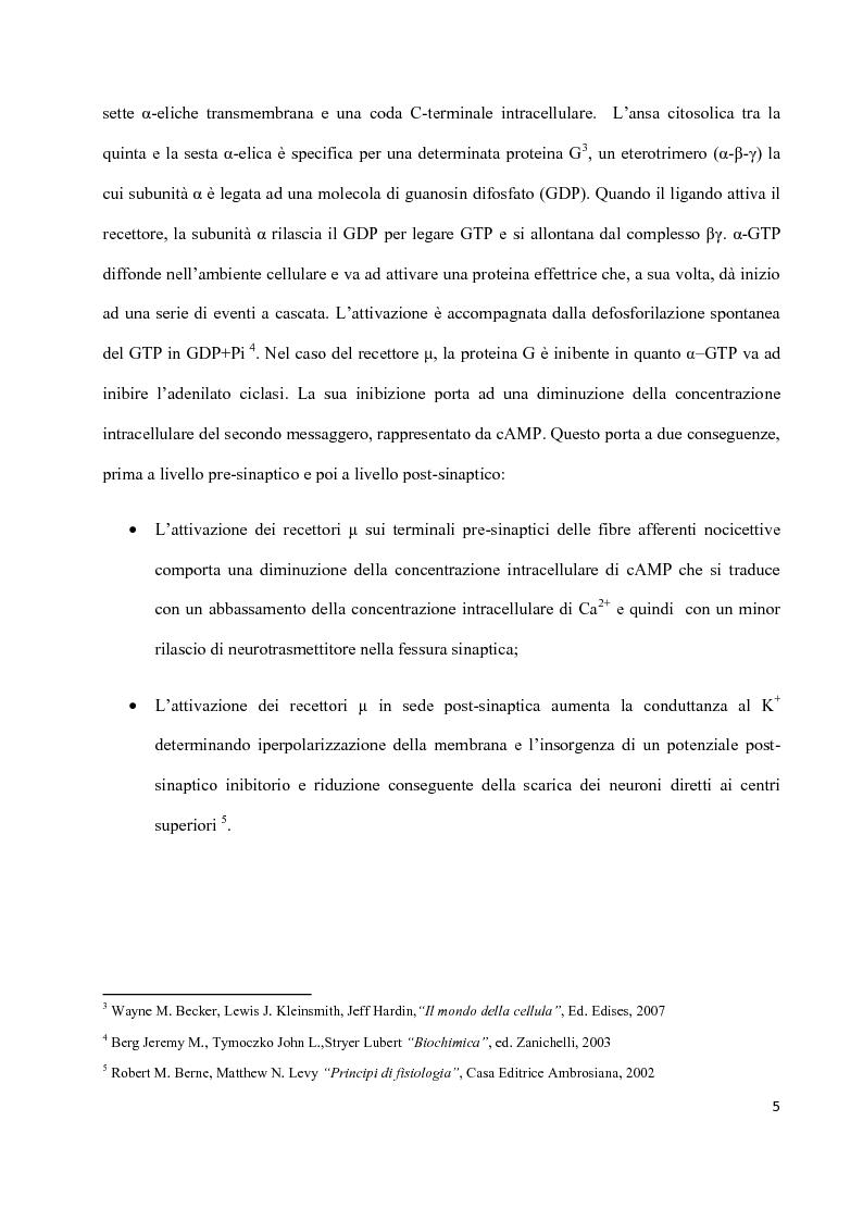 Anteprima della tesi: Sintesi di peptidi attivi verso MOR e studio dell'interazione ligando-recettore, Pagina 4