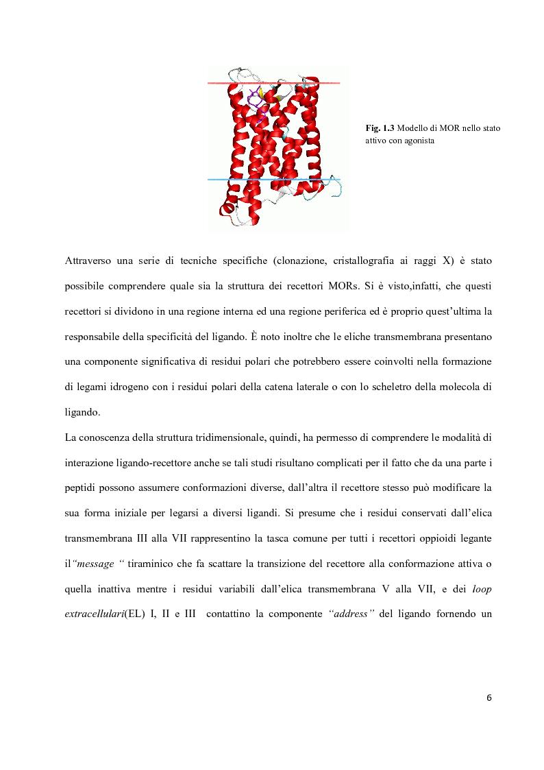 Anteprima della tesi: Sintesi di peptidi attivi verso MOR e studio dell'interazione ligando-recettore, Pagina 5