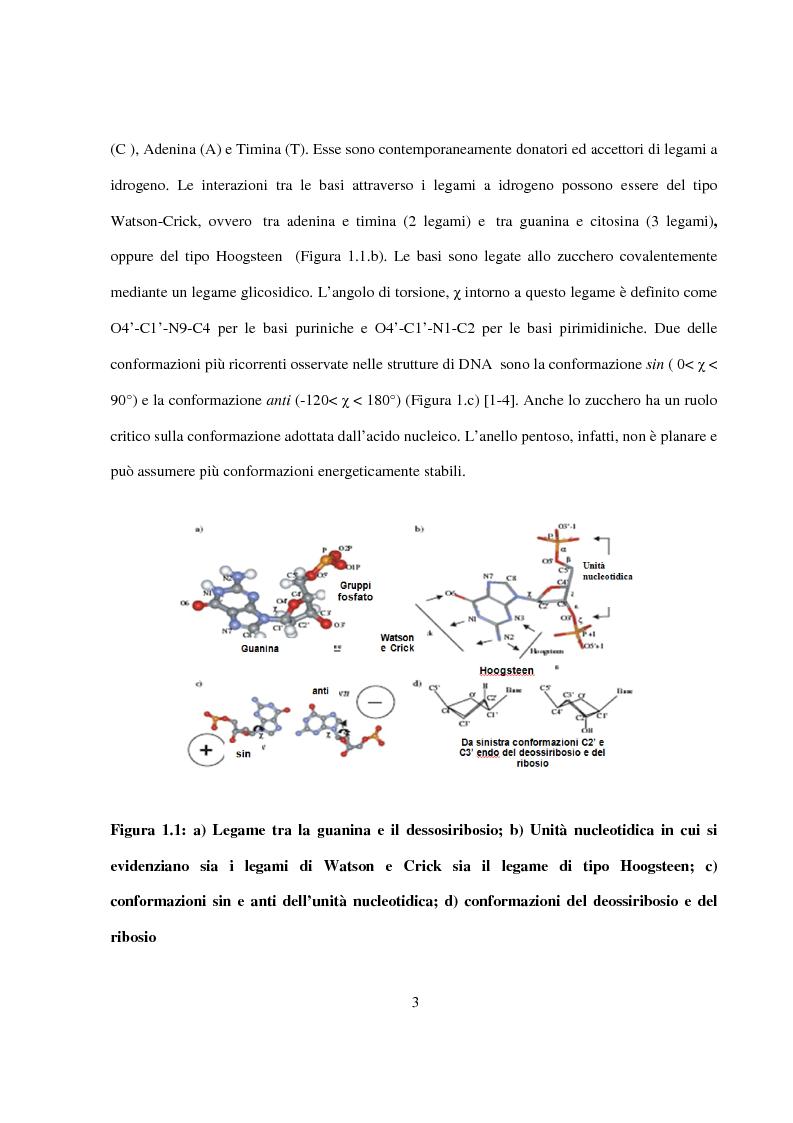 Anteprima della tesi: Caratterizzazione e cristallizzazione di sequenze oligonucleotidiche ricche in guanina formanti quadruple eliche di DNA, Pagina 4