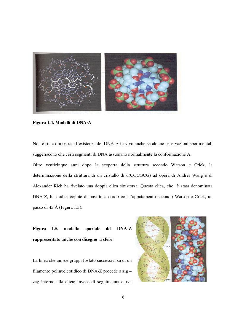 Anteprima della tesi: Caratterizzazione e cristallizzazione di sequenze oligonucleotidiche ricche in guanina formanti quadruple eliche di DNA, Pagina 7