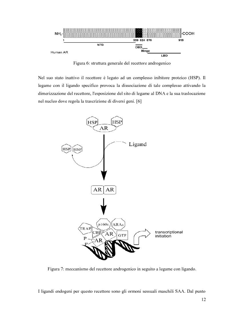 Anteprima della tesi: Agenti dopanti di nuova generazione: strategie analitiche per la determinazione di modulatori selettivi del recettore androgenico (SARM) in fluidi biologici, Pagina 7