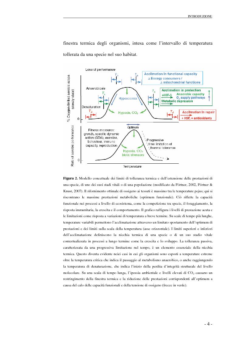 Anteprima della tesi: Risposte cardio-circolatorie a variazioni di temperatura e stress ambientali: il caso di Carcinus maenas e C. aestuarii., Pagina 5