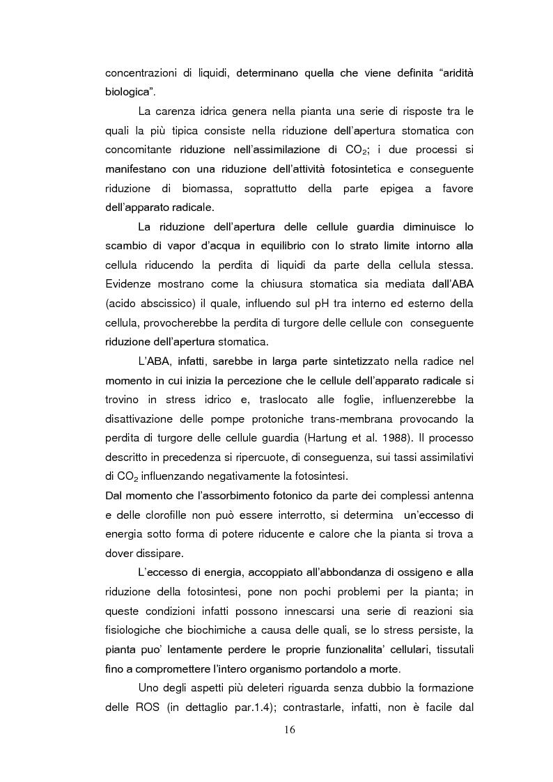 Anteprima della tesi: Sistemi antiossidanti in piante di Fraxinus ornus sottoposte a stress abiotici, Pagina 11