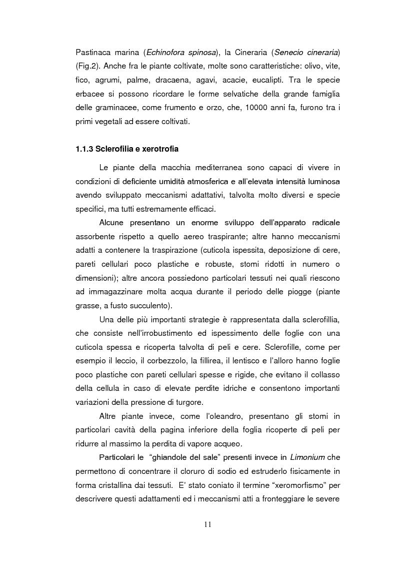 Anteprima della tesi: Sistemi antiossidanti in piante di Fraxinus ornus sottoposte a stress abiotici, Pagina 6