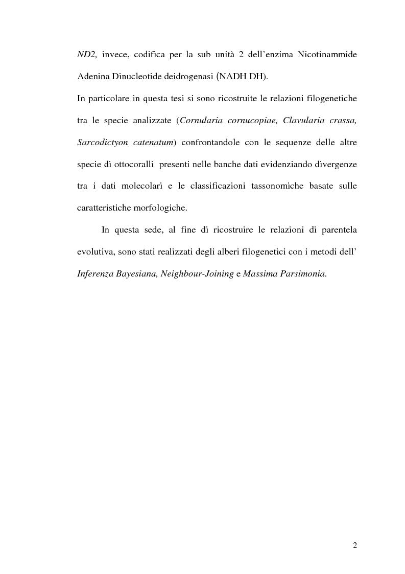 Anteprima della tesi: Filogenesi molecolare di coralli stoloniferi (Cnidaria:Octocorallia), Pagina 3
