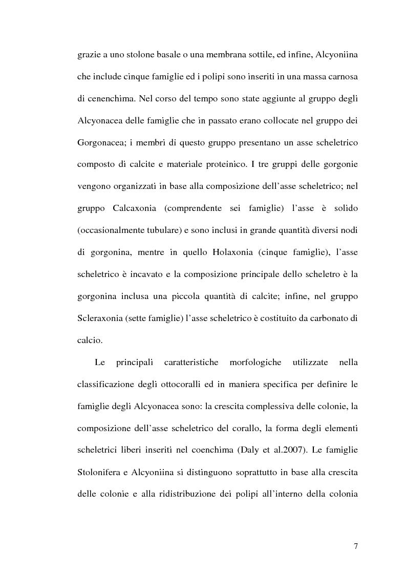 Anteprima della tesi: Filogenesi molecolare di coralli stoloniferi (Cnidaria:Octocorallia), Pagina 8