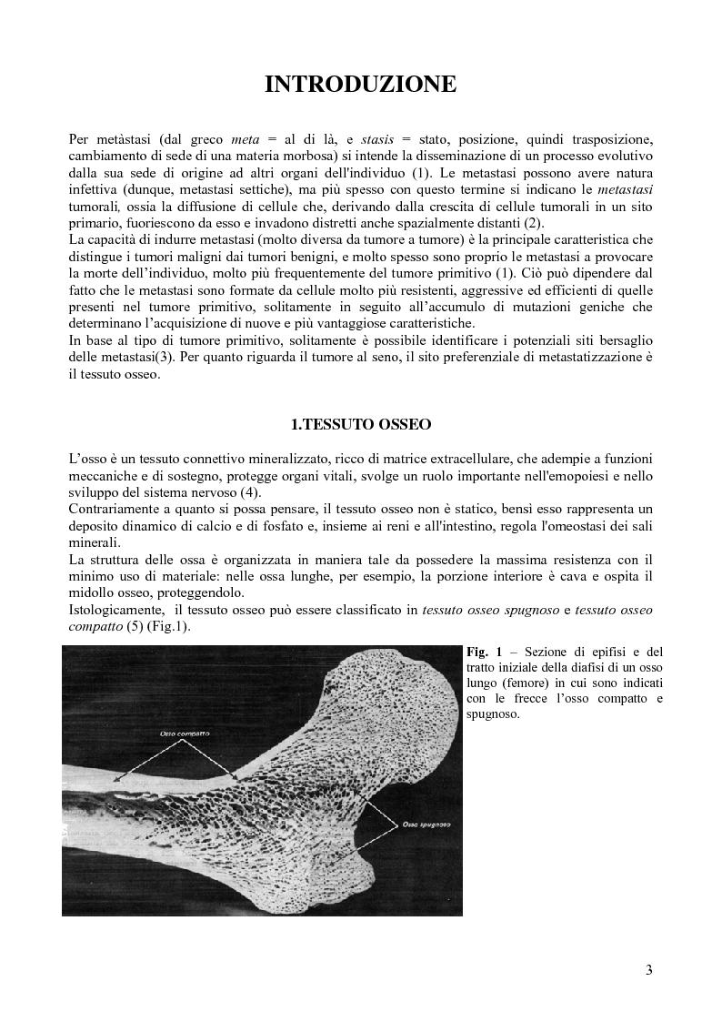 Manipolazione Genetica di cellule MDA-MB-231 e valutazione del fenotipo tumorale - Tesi di Laurea