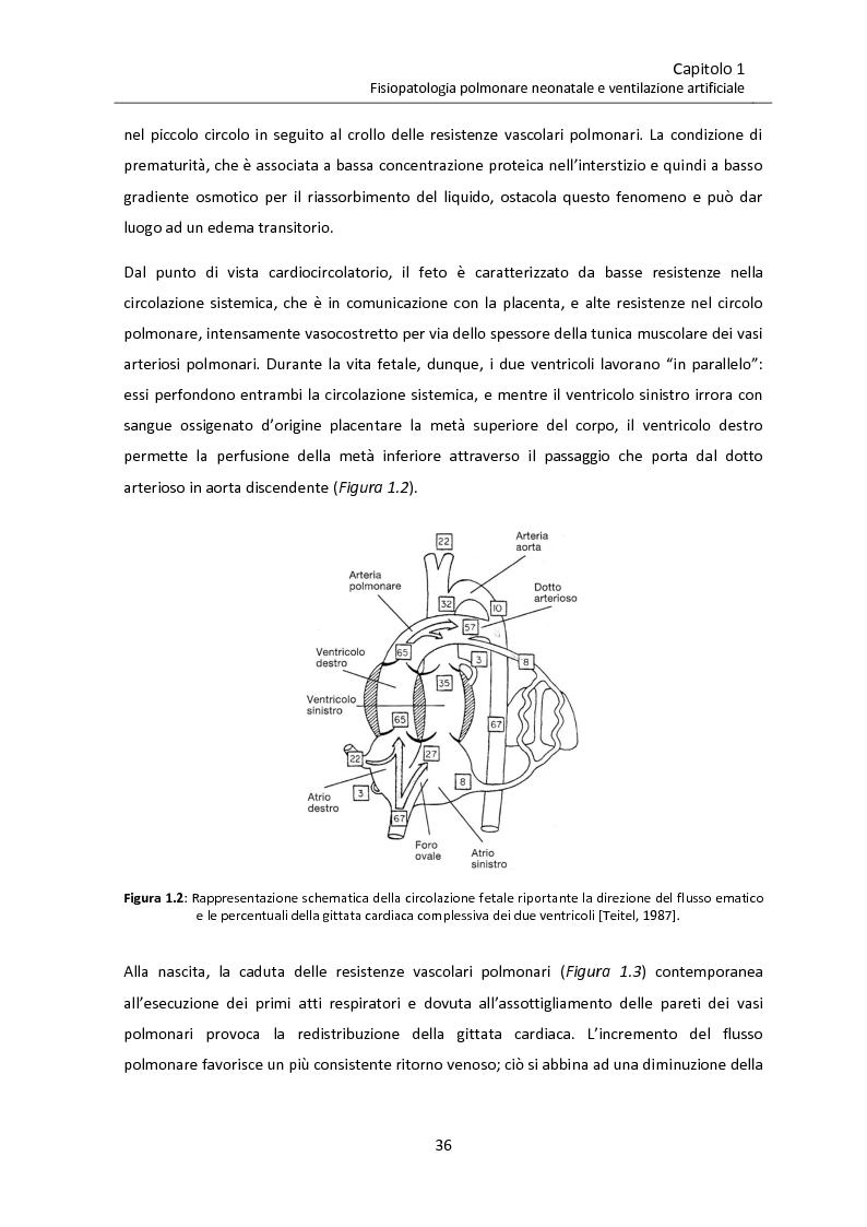 Anteprima della tesi: Modello matematico di interazione tra emodinamica e ventilazione meccanica ad alta frequenza respiratoria in neonati pretermine, Pagina 8