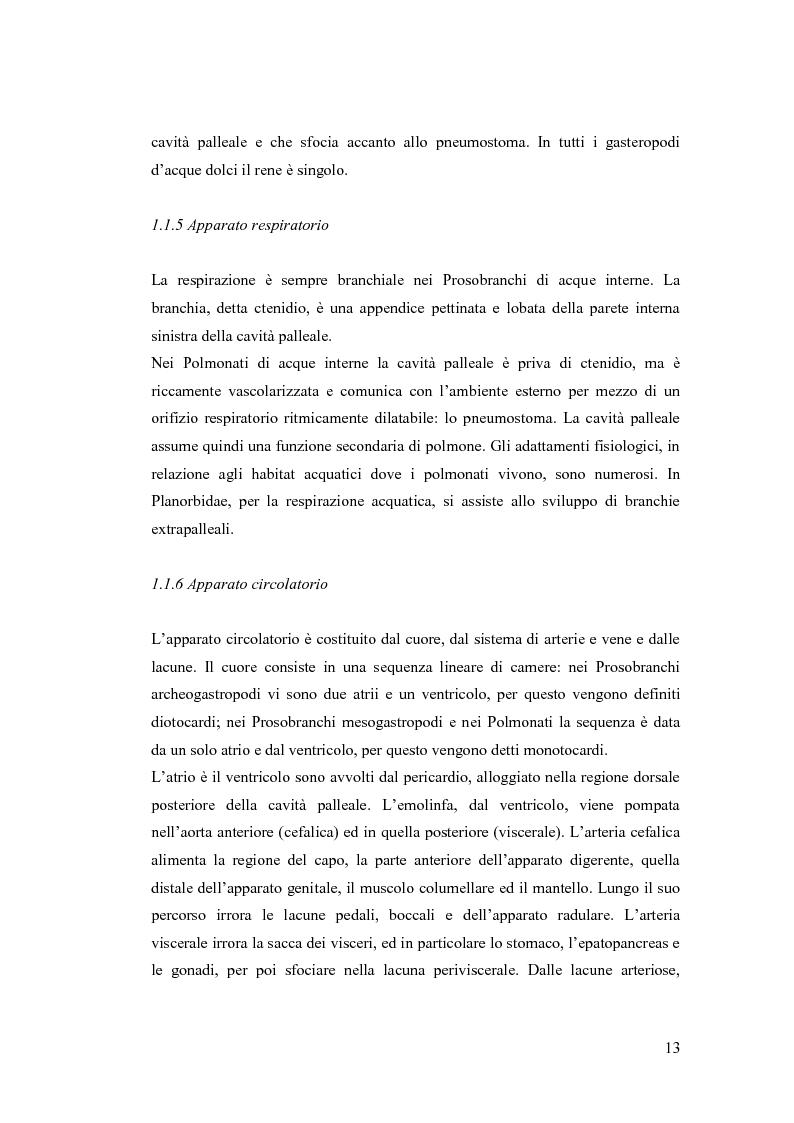 Anteprima della tesi: Osservazioni sulla malacofauna dulciacquicola in ambito urbano, Pagina 11