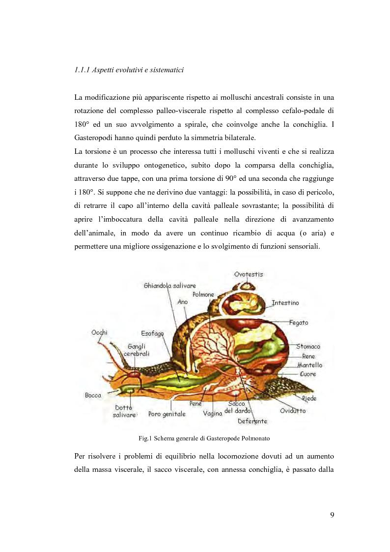 Anteprima della tesi: Osservazioni sulla malacofauna dulciacquicola in ambito urbano, Pagina 7
