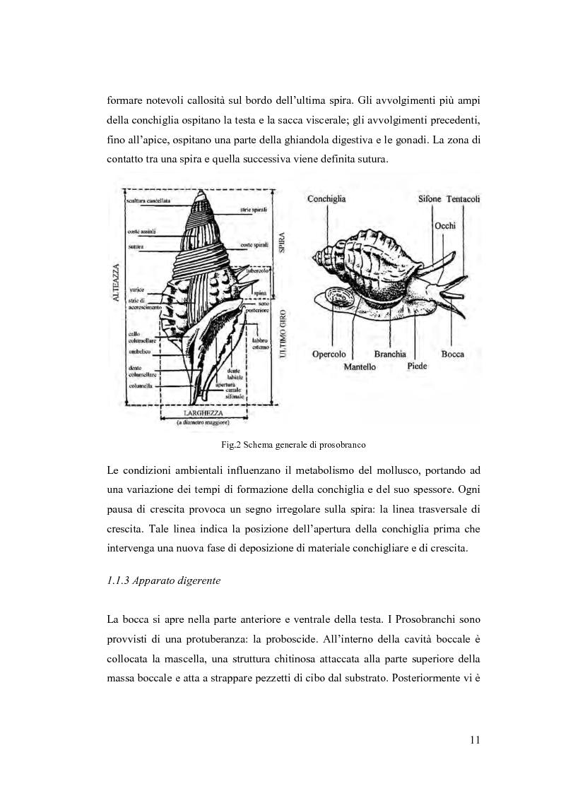 Anteprima della tesi: Osservazioni sulla malacofauna dulciacquicola in ambito urbano, Pagina 9