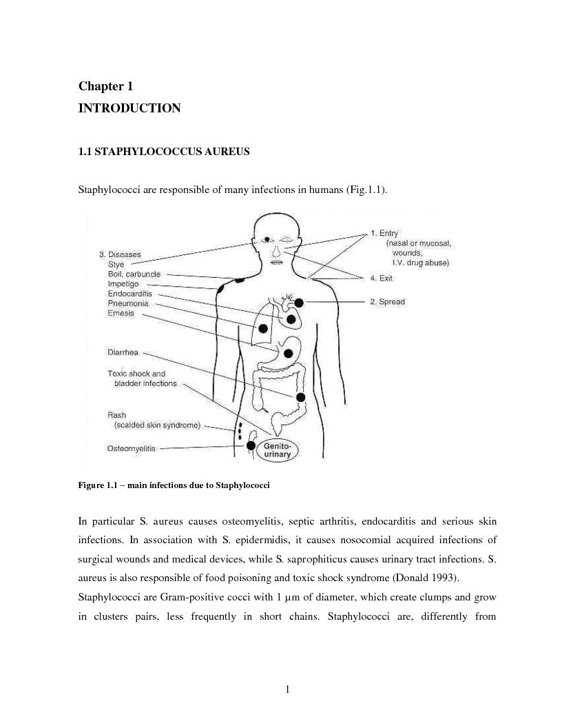 Anteprima della tesi: Implementation of a Chemiluminescent Immunoassay for S. Aureus Protein A in a Cd Microfluidic Device, Pagina 2