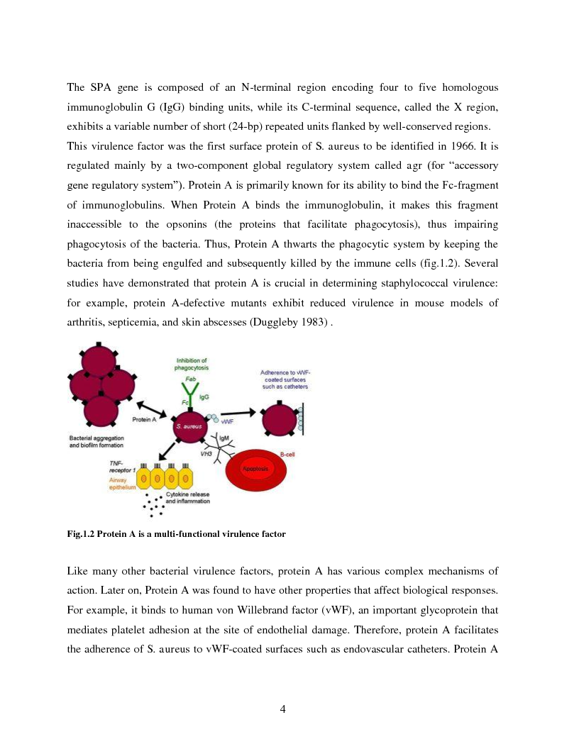 Anteprima della tesi: Implementation of a Chemiluminescent Immunoassay for S. Aureus Protein A in a Cd Microfluidic Device, Pagina 5