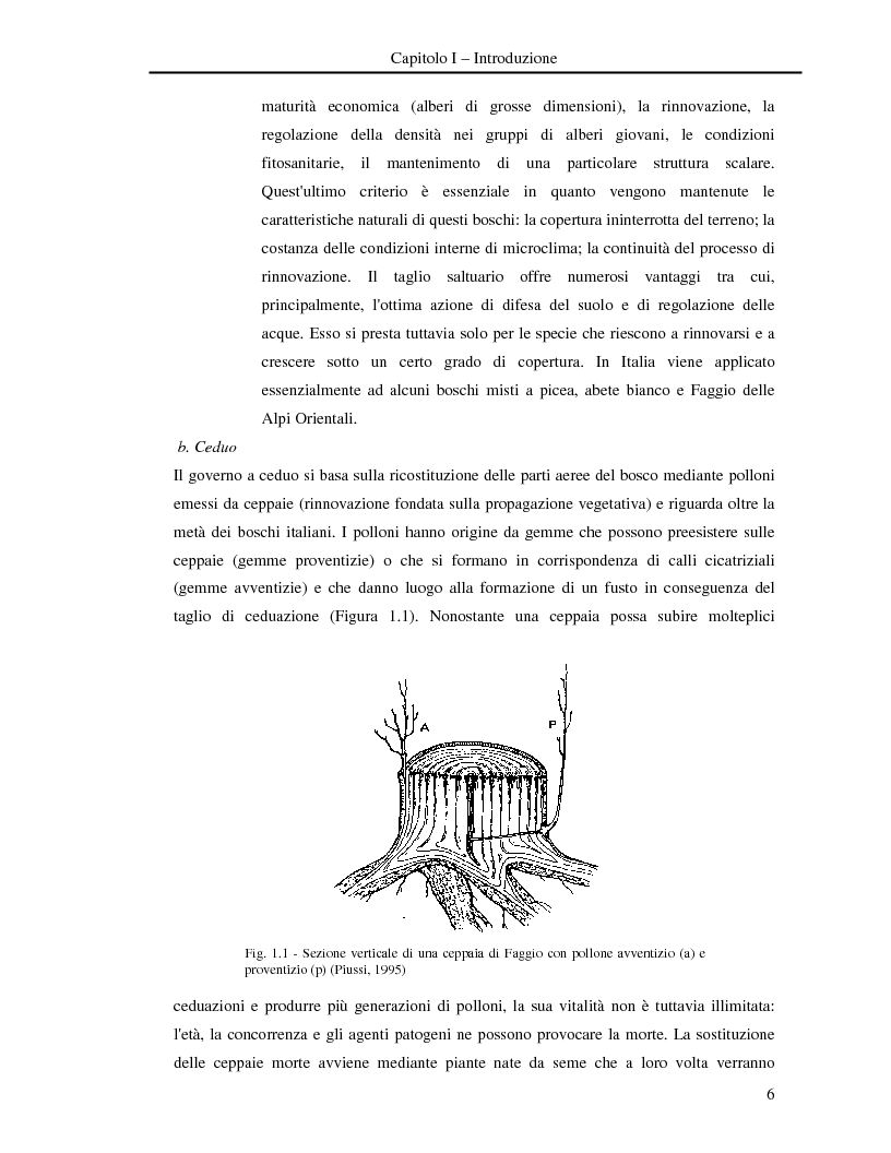 Anteprima della tesi: Misura della biomassa e del contenuto di carbonio nel comparto epigeo ed ipogeo in boschi di faggio (Fagus sylvatica L.), Pagina 7