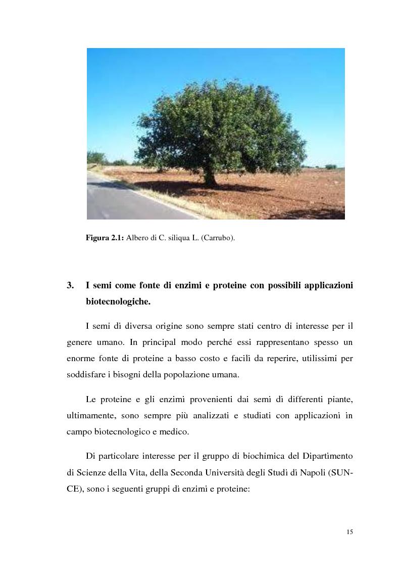 Anteprima della tesi: Isolamento di una nuova malico deidrogenasi da semi di Ceratonia siliqua L. con possibili impieghi in campo biotecnologico, Pagina 8