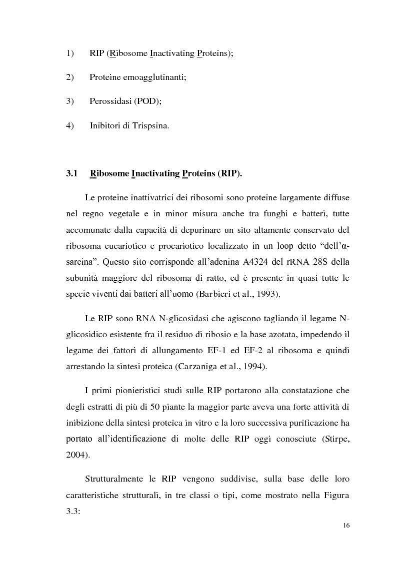 Anteprima della tesi: Isolamento di una nuova malico deidrogenasi da semi di Ceratonia siliqua L. con possibili impieghi in campo biotecnologico, Pagina 9