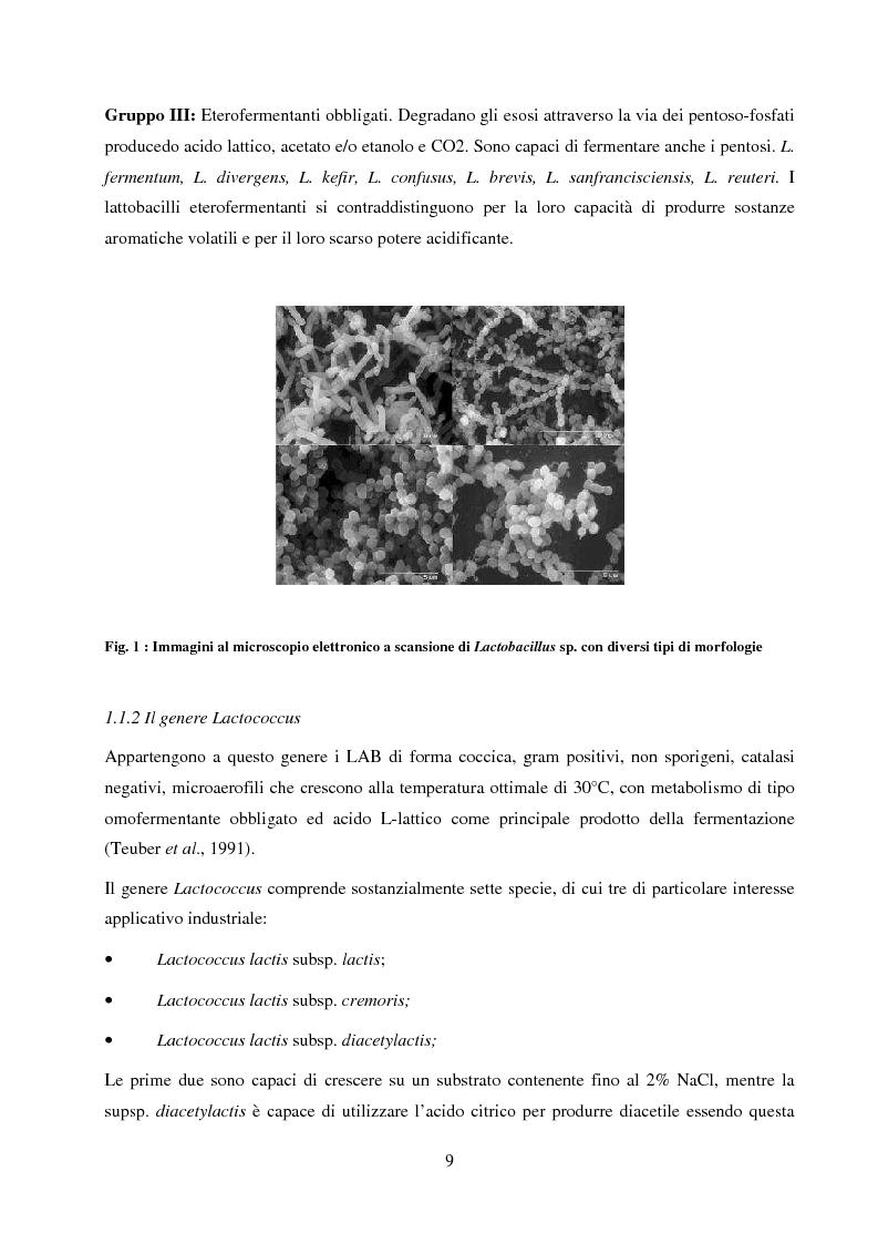 Anteprima della tesi: Valutazione del potenziale probiotico di ceppi di Lactobacillus isolati da Parmigiano-reggiano mediante screening sottrattivo, Pagina 10