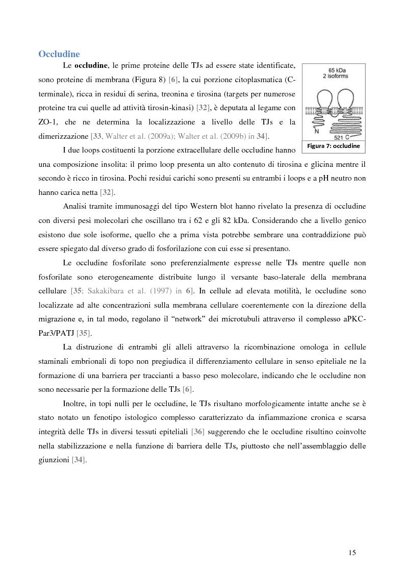 Estratto dalla tesi: Studio dell'Interattoma della Proteina PAR-6 in Cellule di Carcinoma Mammario della linea 8701-BC