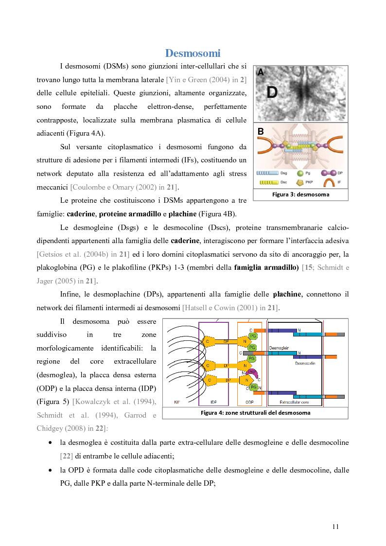 Anteprima della tesi: Studio dell'Interattoma della Proteina PAR-6 in Cellule di Carcinoma Mammario della linea 8701-BC, Pagina 7